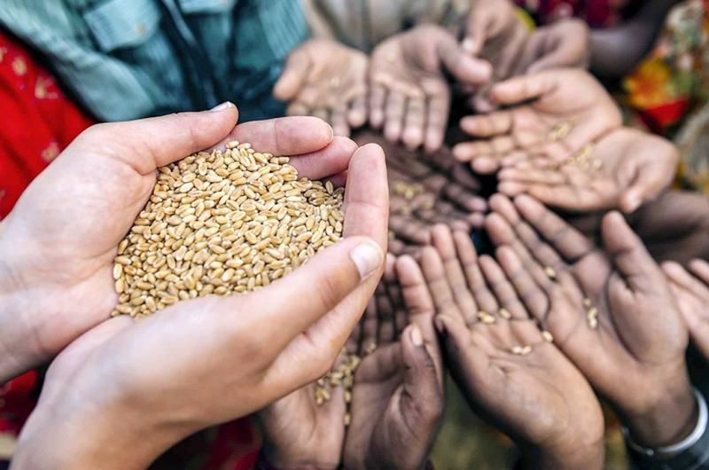 El mundo está al borde de una pandemia alimentaria por COVID-19: ONU