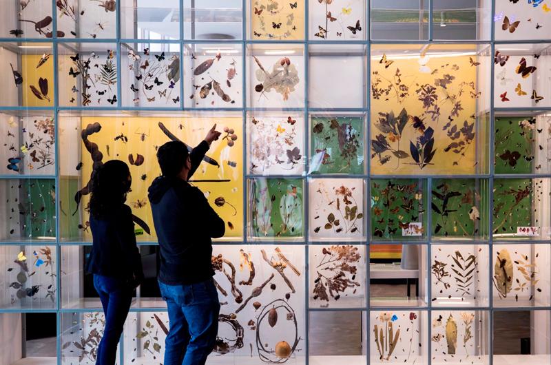 La UNAM abre su Pabellón de Biodiversidad con el apoyo de la Fundación Slim
