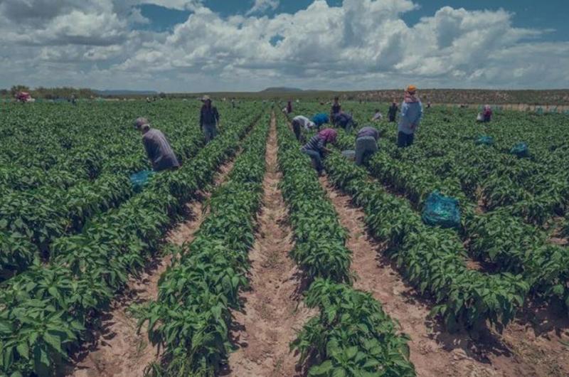 México y EUA desarrollan tecnología para sustentabilidad alimentaria